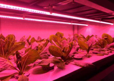 I+D-cultivo-con-luces-LED,-vertical-farming