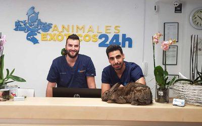 Animales Exóticos 24 H